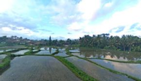 Rice Fields-3