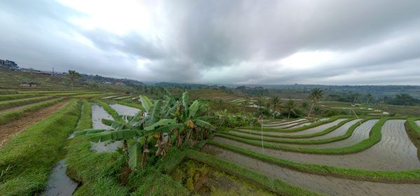 Jatiluwi Rice Terrace