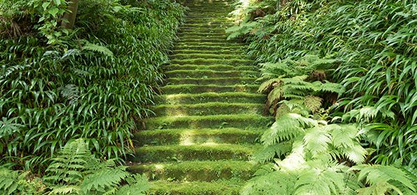 Kamakura Hiking Trails