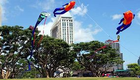 Kite Flying Area