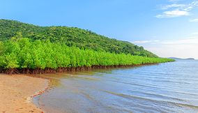 Mangrove National Park