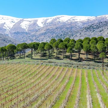 Things to do in Bekaa