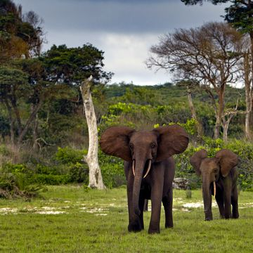 Things to do in Gabon