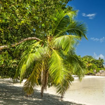 Things to do in Inner Islands Seychelles
