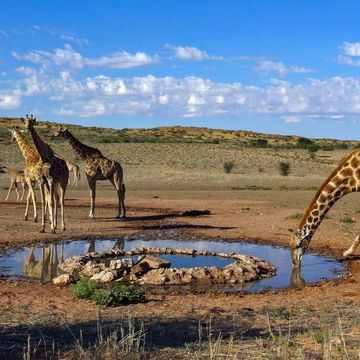 Things to do in Kgalagadi South