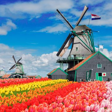 Things to do in Netherlands