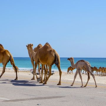 Things to do in Salalah