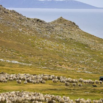 Things to do in West Falkland