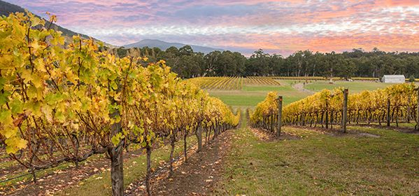 Yarra Valley Wineries