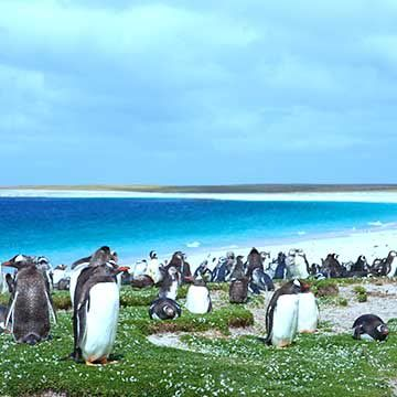 Things to do in Falklands Islands (UK)