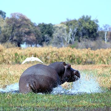 Things to do in Okavango River Basin