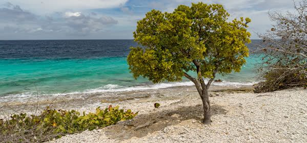 Things to do in Bonaire - 1,000 Steps Beach