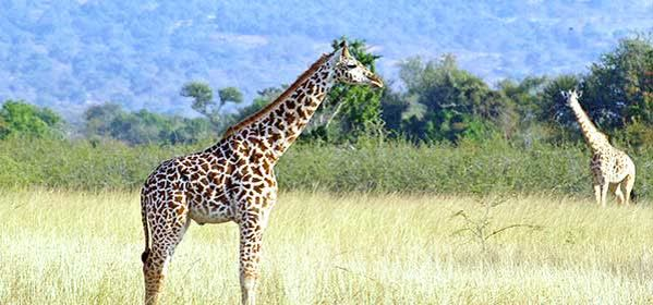 Things to do in Gatsibo - Akagera National Park