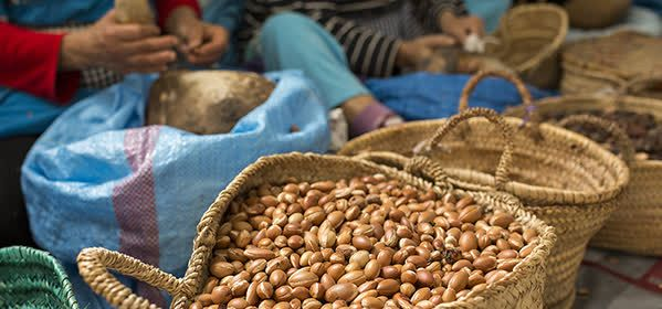 Things to do in Essaouira - Argan oil cooperative