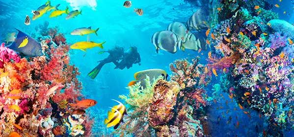Things to do in Male - Banana Reef