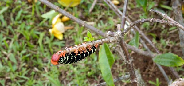 Things to do in Bonaire - Bonaire Butterfly Farm
