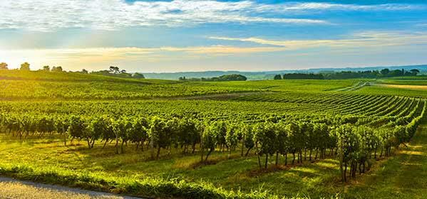 Things to do in Bordeaux - Bordeaux Vineyards
