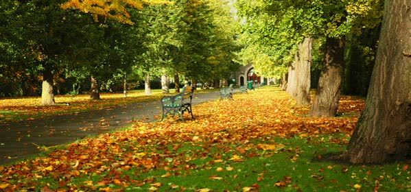 Things to do in Cardiff - Bute Park
