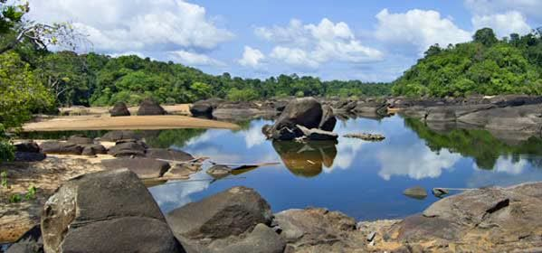 Things to do in Boven Coppename - Central Suriname Nature Reserve