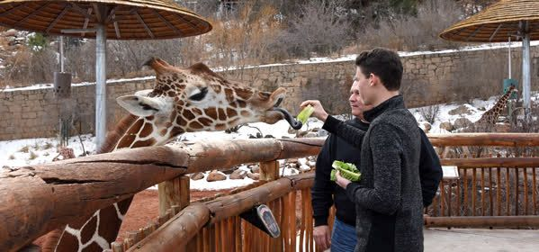 Things to do in El Paso County - Cheyenne Mountain Zoo