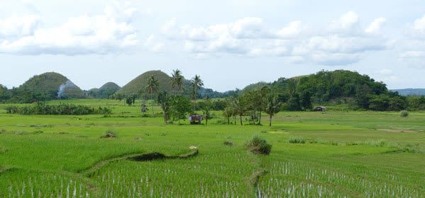 Things to do in Bohol - Chocolate Hills
