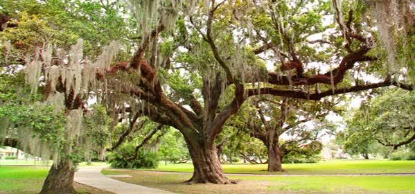 Things to do in New Orleans - City Park