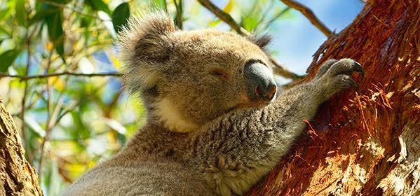 Things to do in Byford - Cohunu Koala Park
