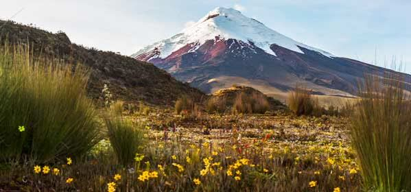 Things to do in Cotopaxi - Cotopaxi