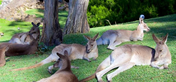 Things to do in Gold Coast - Currumbin Wildlife Sanctuary