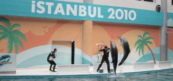 Things to do in Istanbul - Dolphinarium Istanbul