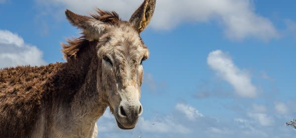 Things to do in Bonaire - Donkey Sanctuary Bonaire