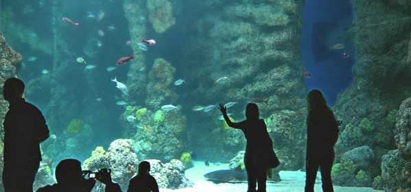 Things to do in Denver - Downtown Aquarium