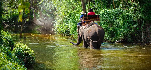 Things to do in Krabi - Elephant ride