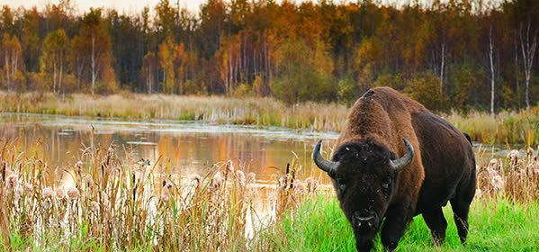 Things to do in Edmonton - Elk Island National Park