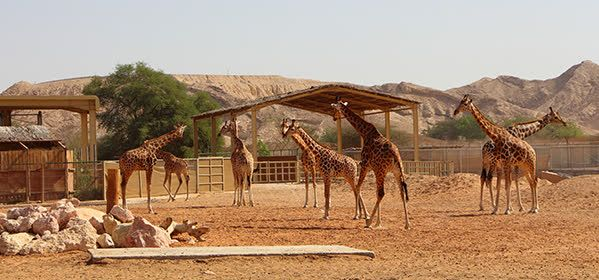 Emirates Park Zoo (in Al Bahia)