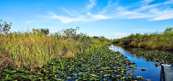 Things to do in Orlando - Everglades