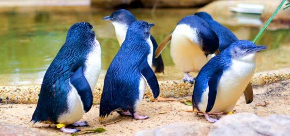 Things to do in Sydney - Featherdale Wildlife Park