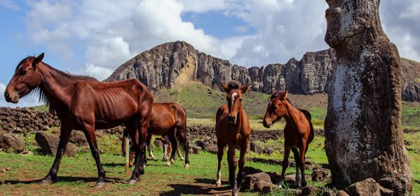 Things to do in Easter Island - Horseback Riding