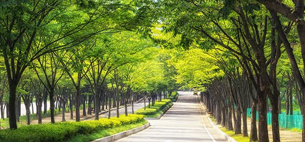 Things to do in Incheon - Incheon Grand park