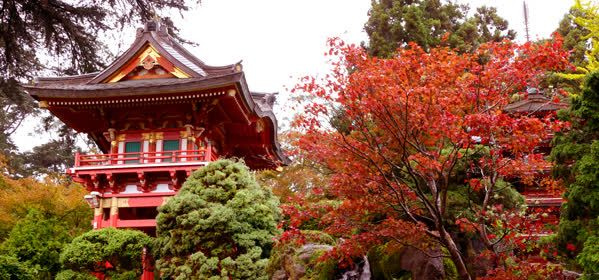 Things to do in San Francisco - Japanese Tea Garden