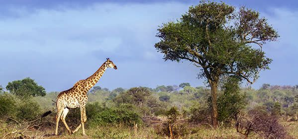 Things to do in Gaza - Limpopo National Park
