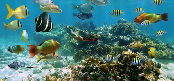 Things to do in Cozumel - National Marine Park