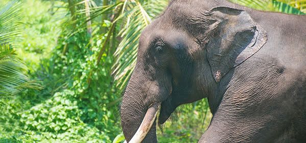 Things to do in Colombo - National Zoological Gardens of Sri Lanka