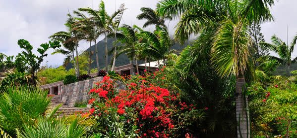 Things to do in Nevis - Nevis Botanical Gardens
