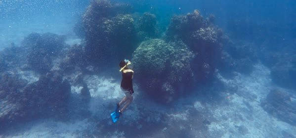 Things to do in Cozumel - Palancar Reef