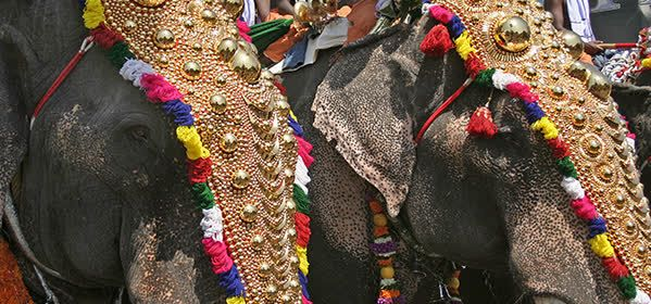 Things to do in Kerala - Pooram Festival