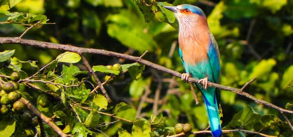 Things to do in Montego Bay - Rocklands Bird Sanctuary