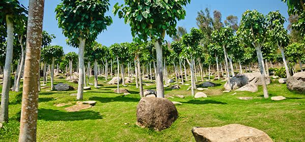 Things to do in Sanya - Sacred Fig Woods
