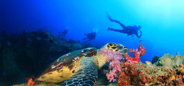 Things to do in Higuey - Scuba Quatic
