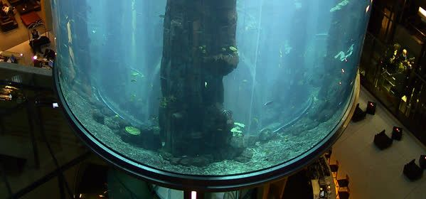 Things to do in Berlin - SeaLife AquaDom